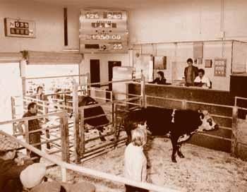 Histoirique ventes aux enchères bétail